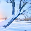 Tree on the bank of the river covered with ice — Stock Photo