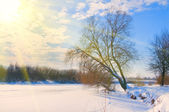Tree on the bank of a frozen river in rays of sun — Stock Photo