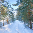 Forest winter road covered with snow — Stock Photo