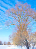 A trees on the bank of frozen river. Beautyful blue sky — Stock Photo