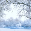Trees on the bank of the river in snowfall — Stock Photo #9362327