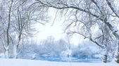 Trees on the bank of the river in snowfall — Stock Photo