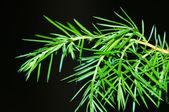 Green branch on dark background — Foto de Stock