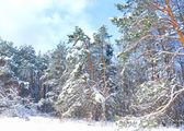 Orman kar kaplı. kış manzarası — Stok fotoğraf