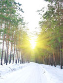 Road in the pine forest in winter sunny day — Stock Photo