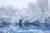 Alberi coperti di neve. paesaggio invernale. — Foto Stock