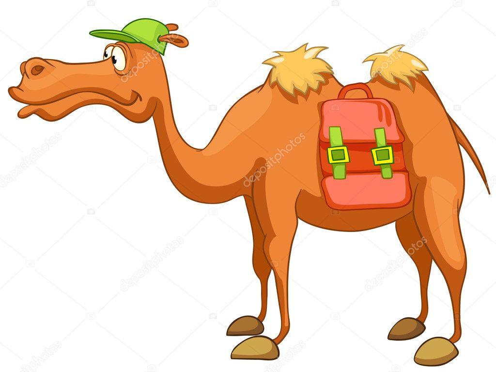 Orange camel plan