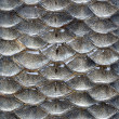 Fish scales seamless pattern — ストック写真
