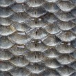 Fish scales seamless pattern — 图库照片