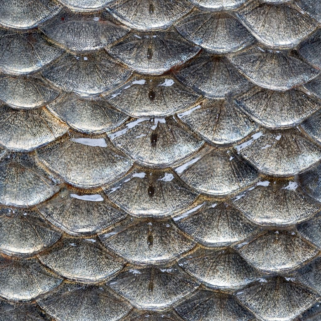 Fish scales seamless pattern stock photo ziablik 10429265 for Do all fish have scales