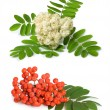 Rowan berry and flowers - Stock Photo