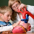 Doctor schoolboy and heart model — Stock Photo #10210239
