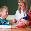 Doctor schoolboy and heart model — Stock Photo