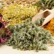 Healing herbs on wooden table, herbal medicine — Stock Photo #9732517