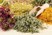 Healing herbs on wooden table, herbal medicine — Stock Photo