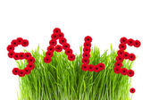 Word sale made of gerber flowers, green grass on white — Foto Stock