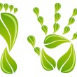 Hand and foot with leaves, vector — Imagen vectorial
