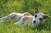 Doggie — Stock Photo