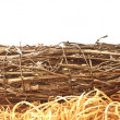 Bird's nest in front. — Stock Photo