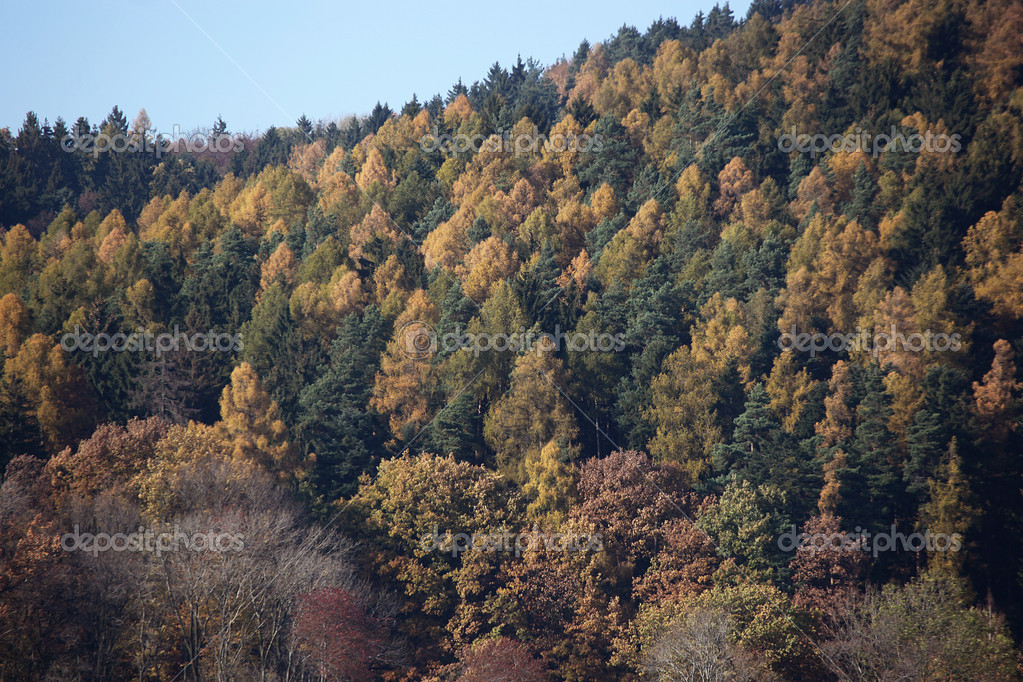 View of the autumn woods — Stock Photo #8363180