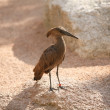 Bird in Biopark Valencia — Stock Photo