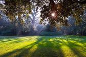 Park zámku chenonceau — Stock fotografie