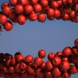 Stock Photo: two tasty tomatoe cherry streams on blue