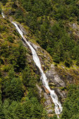 Himalaya Landscape: waterfall and forest trees — Stok fotoğraf