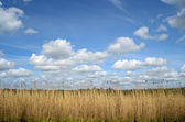 Reed and clouds — Stock Photo