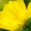 Dissolved yellow flower — Stock Photo