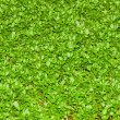 Real green grass — Stock Photo