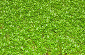 Real green grass — Stockfoto