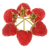Red raspberries — Stock Photo