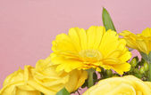 Vibrant Yellow Flower Background — Stock Photo