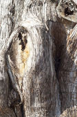 Texture of Old Tree — Stock Photo