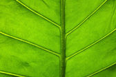 Leaf Surface — Stock Photo