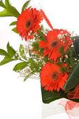 在一张白纸的华丽花束非洲菊 — 图库照片