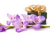 Mooie gladiolen en cadeau doos op een witte achtergrond. — Stockfoto