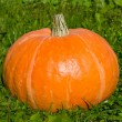 Beautiful pumpkin on a grass — Stock Photo