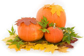 Pumpkins with fall leaves on white background — Stock Photo