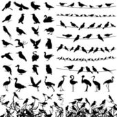 Samling av silhuetter av fåglar. — Stockvektor