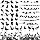 Kolekce siluety ptáků. — Stock vektor