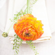 Orange ranunkulus flower — Stock Photo
