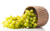 White grapes in a wicker basket — Stock Photo