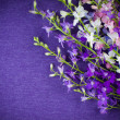Background with purple flowers — Stock Photo