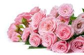 Nasse rosa rosen auf weißem hintergrund — Stockfoto
