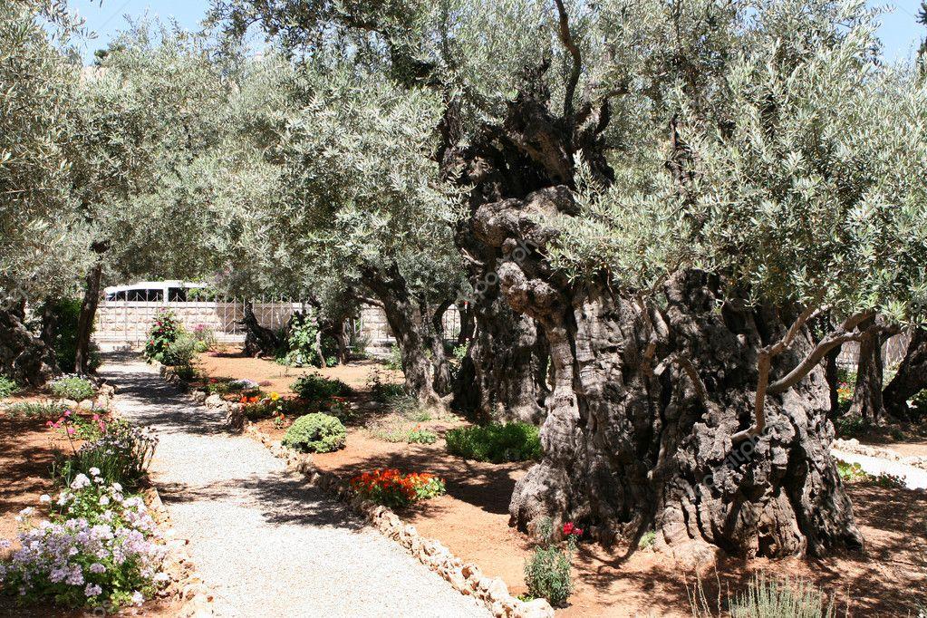 imagens do jardim getsemani:Garden of Gethsemane Jerusalem Israel