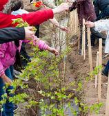 Plantio de árvores de primavera — Foto Stock