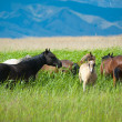 Grazing horses on grassland — Stock Photo