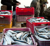 Buena captura de peces — Foto de Stock